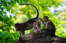 Cute Monkeys At Elephanta Island