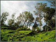 Bhandardara Scenic Forests