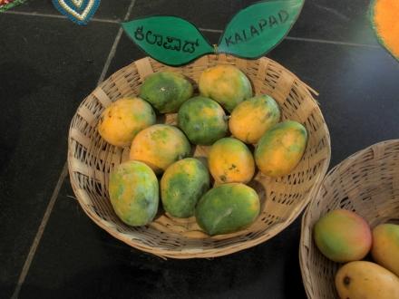 Kallapad Mango
