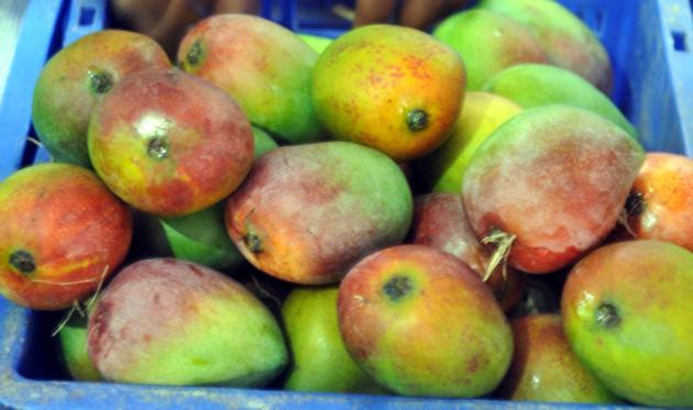 Sendhura Mango